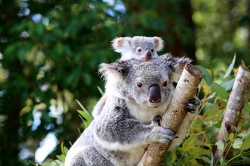澳洲留学签证 - 办理流程 - 费用